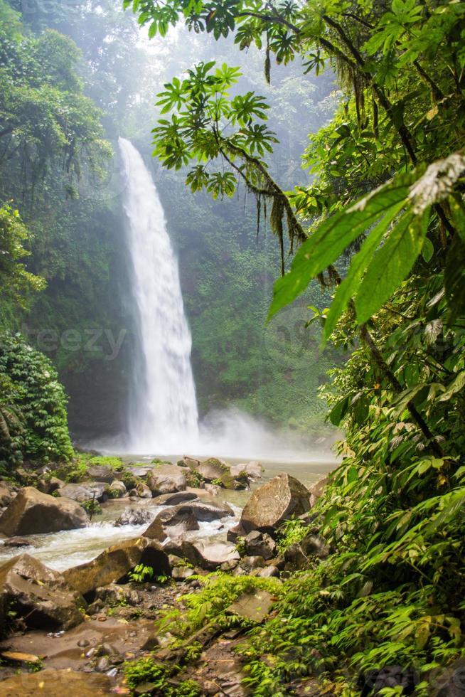 cascade de la forêt tropicale photo