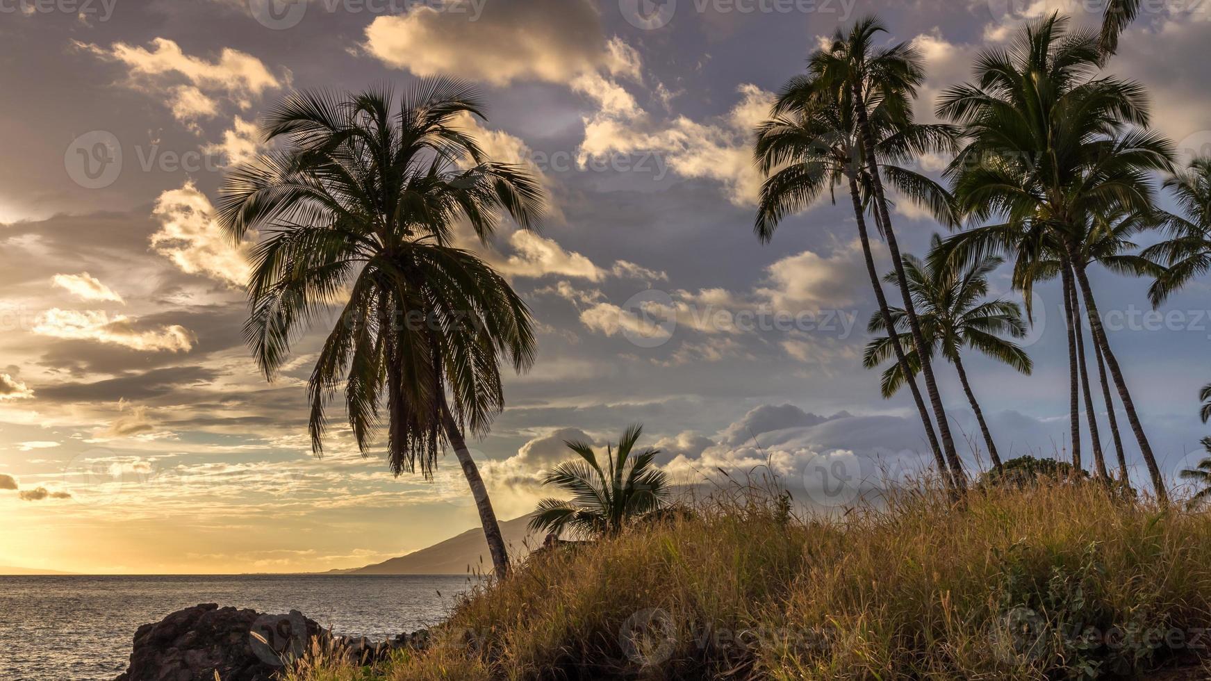 palmiers au coucher du soleil sur maui photo