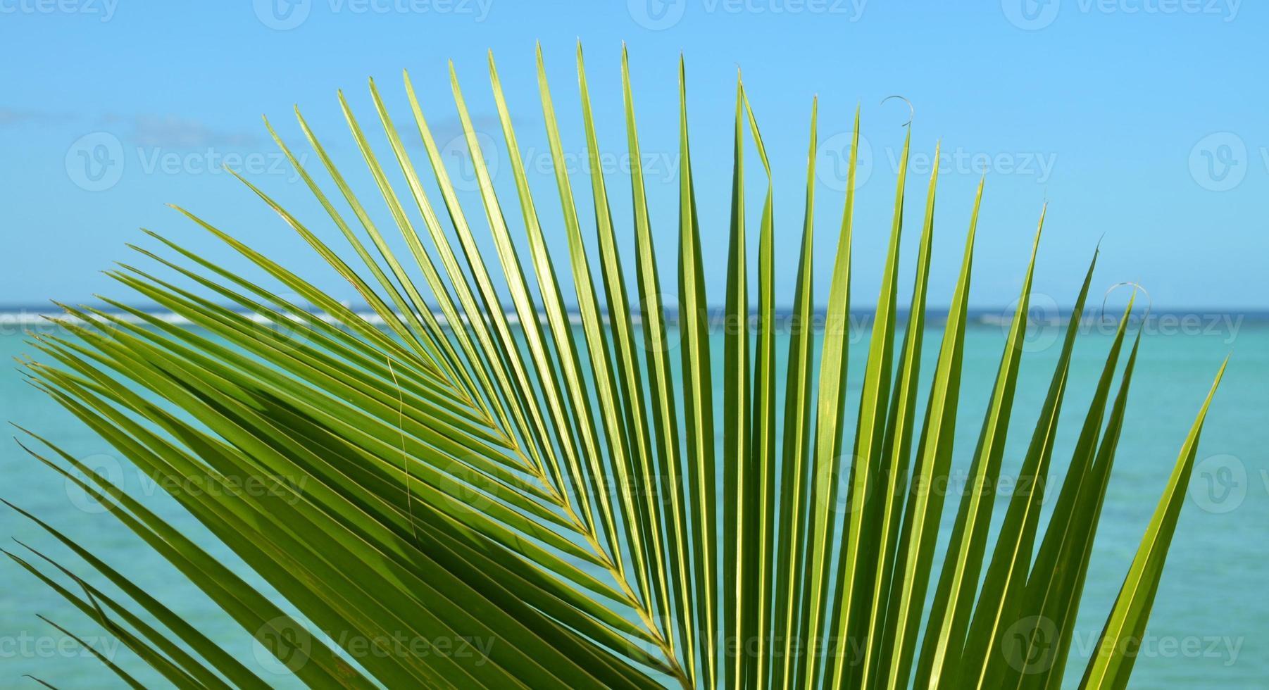 fronde de palmier devant l'océan photo