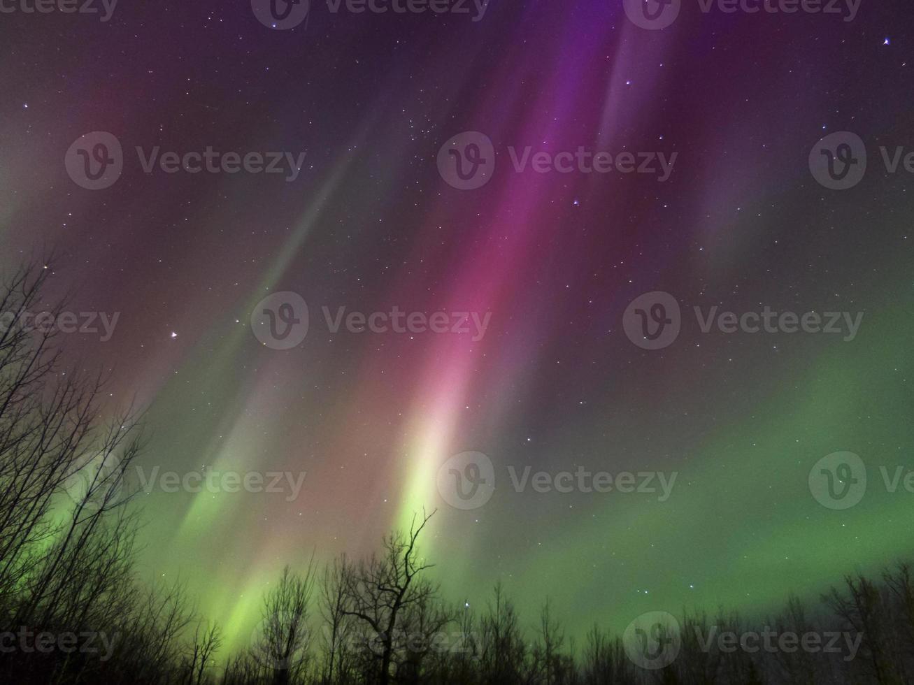 aurores boréales (aurores boréales) en Alberta, Canada photo