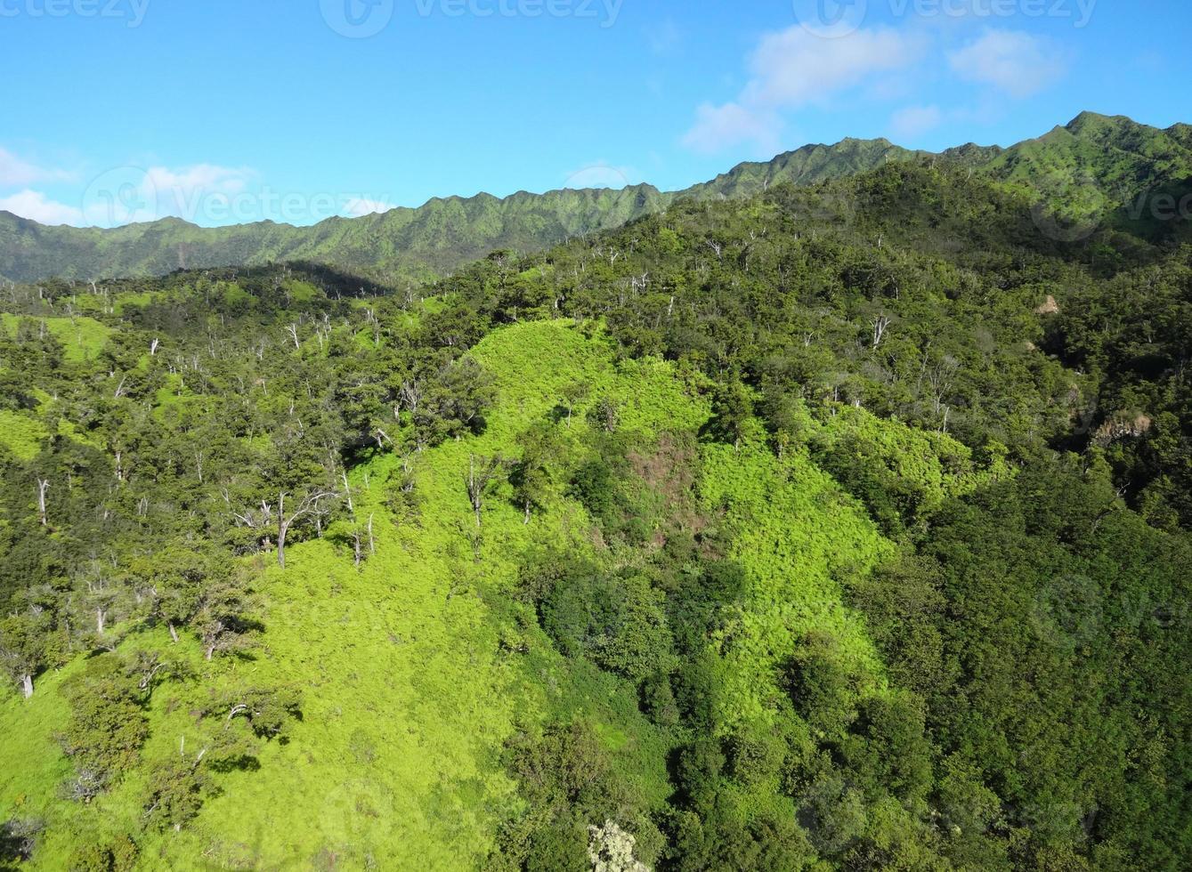 verts de kauai photo