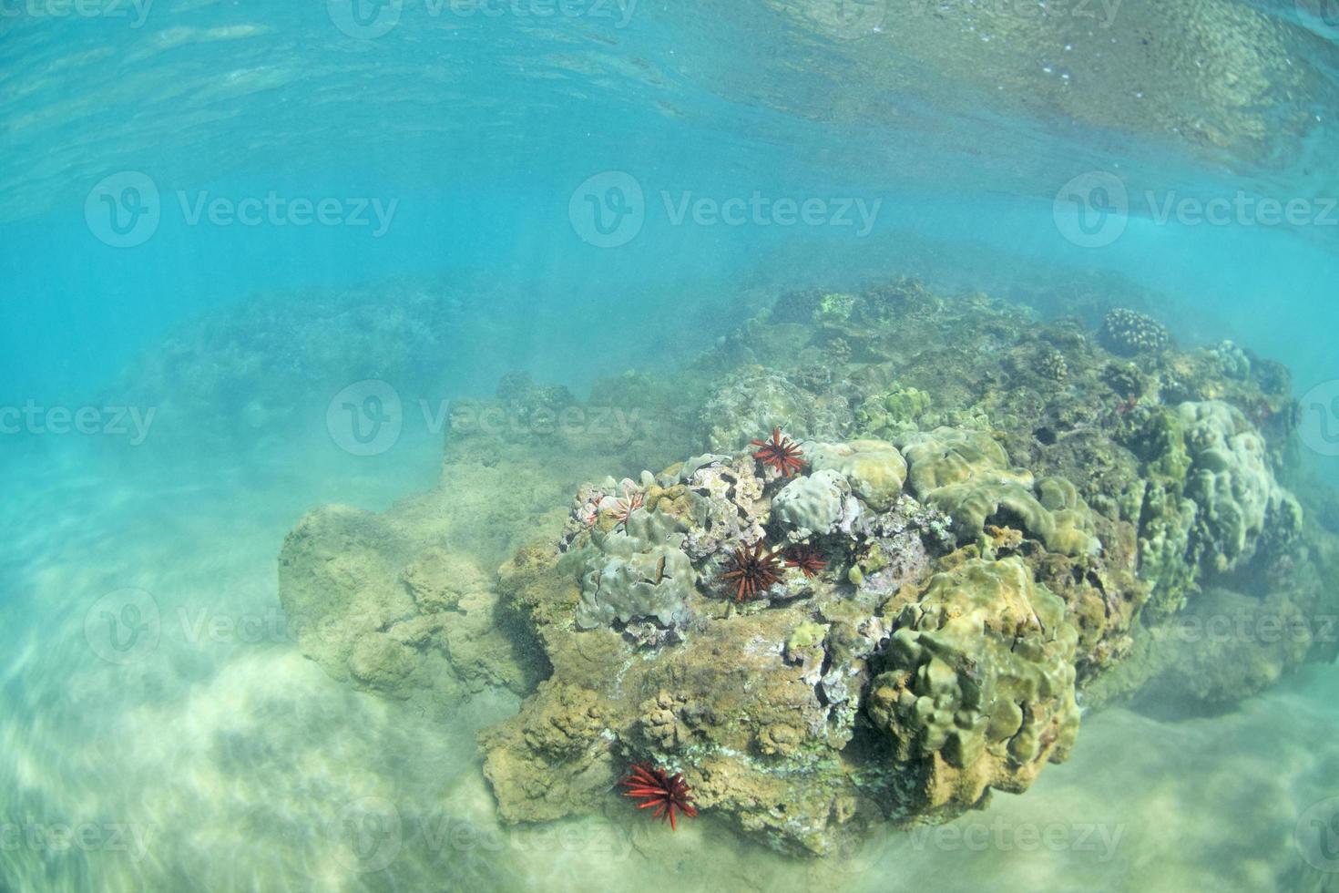 récif de wailea photo