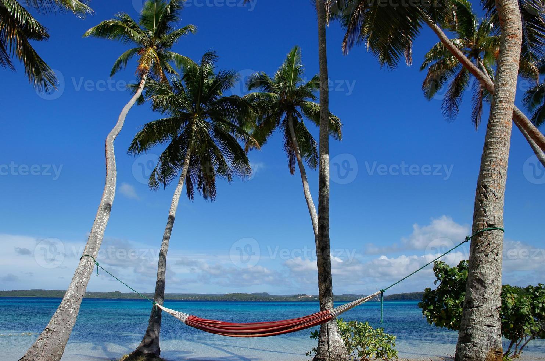 hamac coloré entre palmiers, île ofu, groupe vavau, à photo