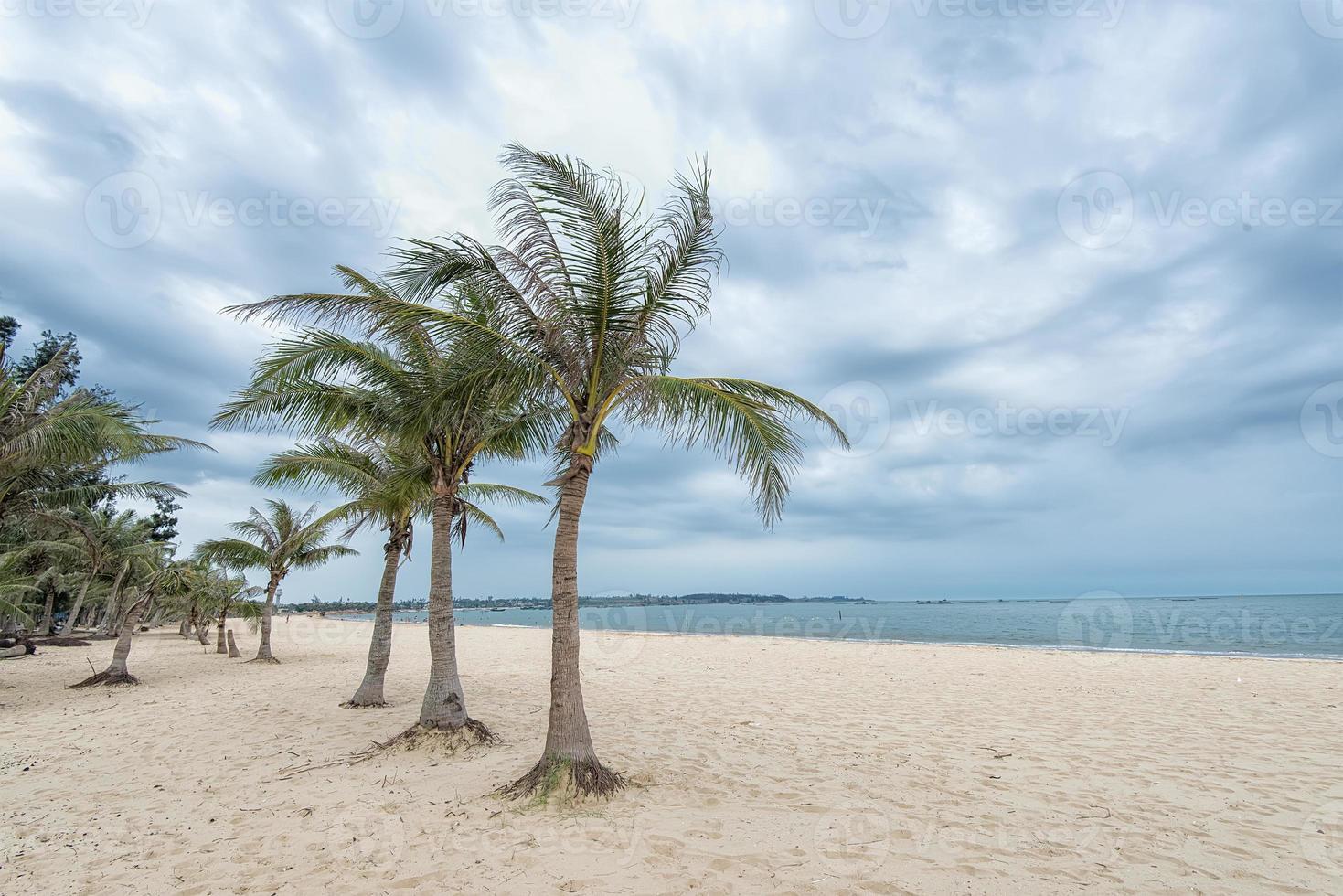 plage bordée de palmiers photo