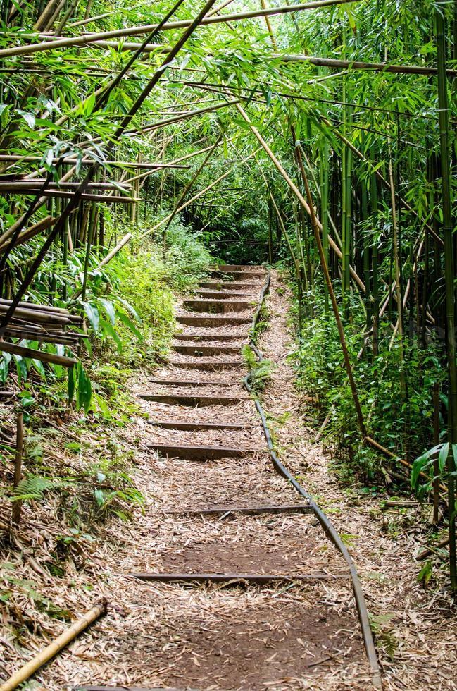 à travers le bambou photo
