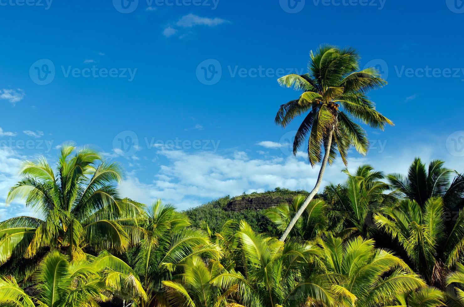 Cocotiers dans les îles Cook de la lagune d'Aitutaki photo