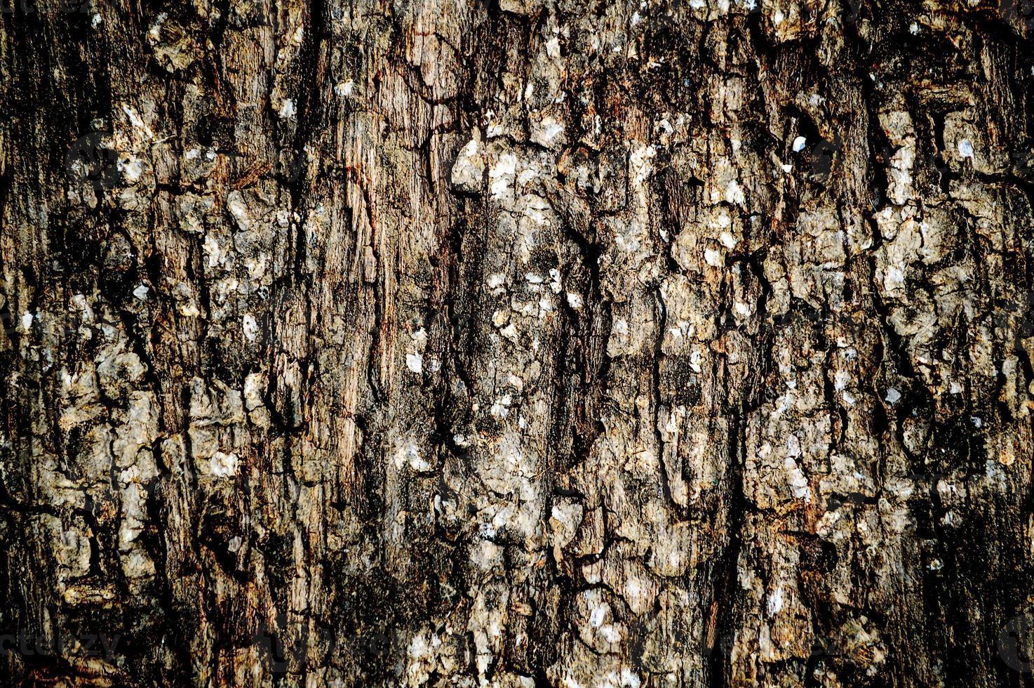 texture de planche de bois grunge photo