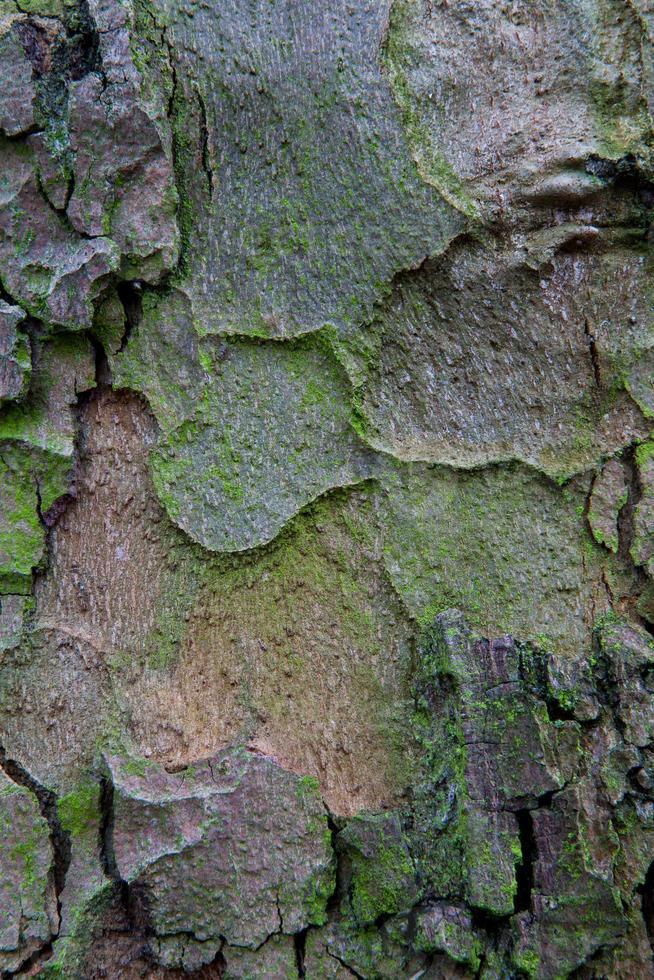 fond de planche de bois en bois photo