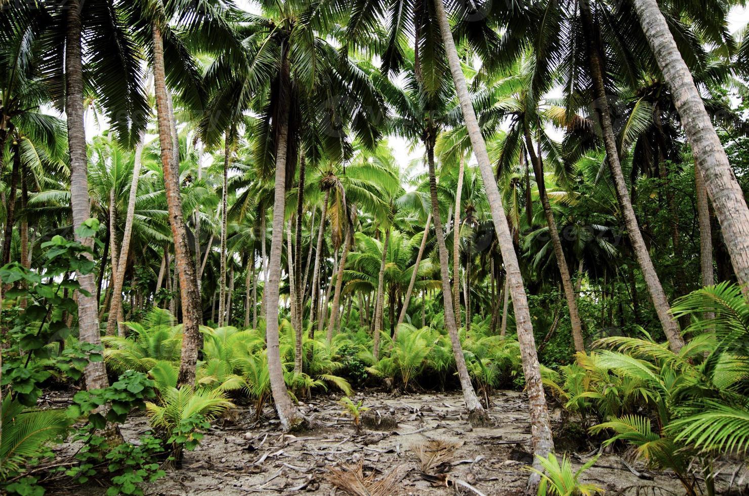 jungle de la forêt tropicale du pacifique sud photo