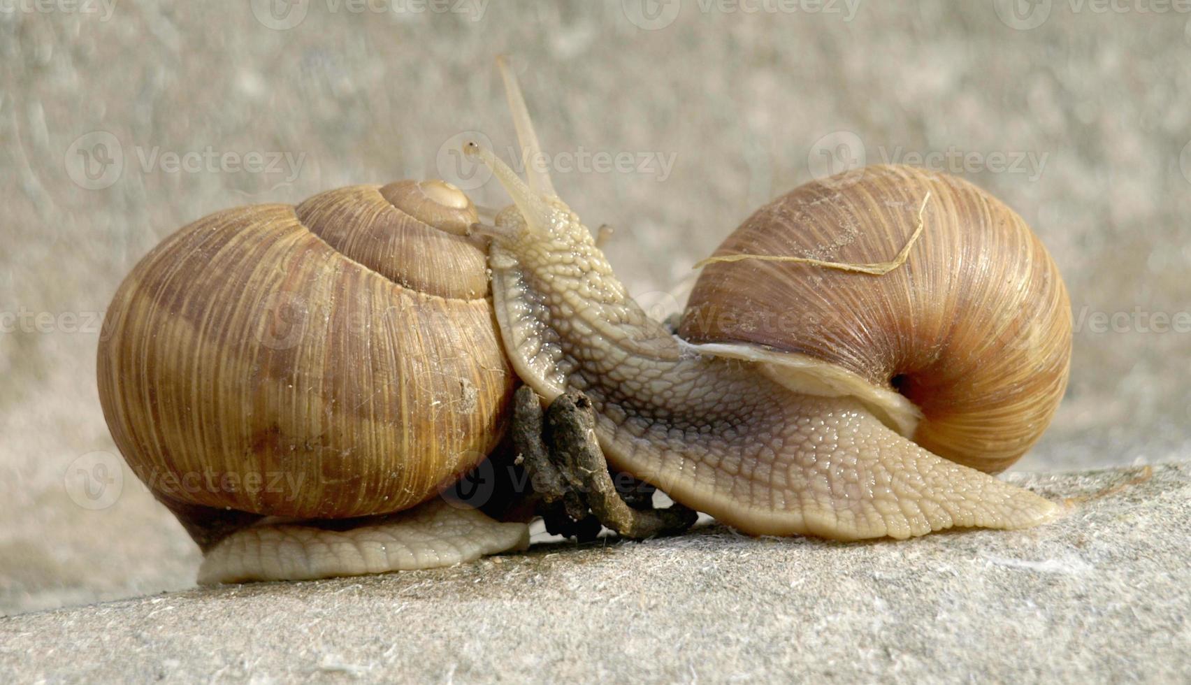 famille d'escargots photo