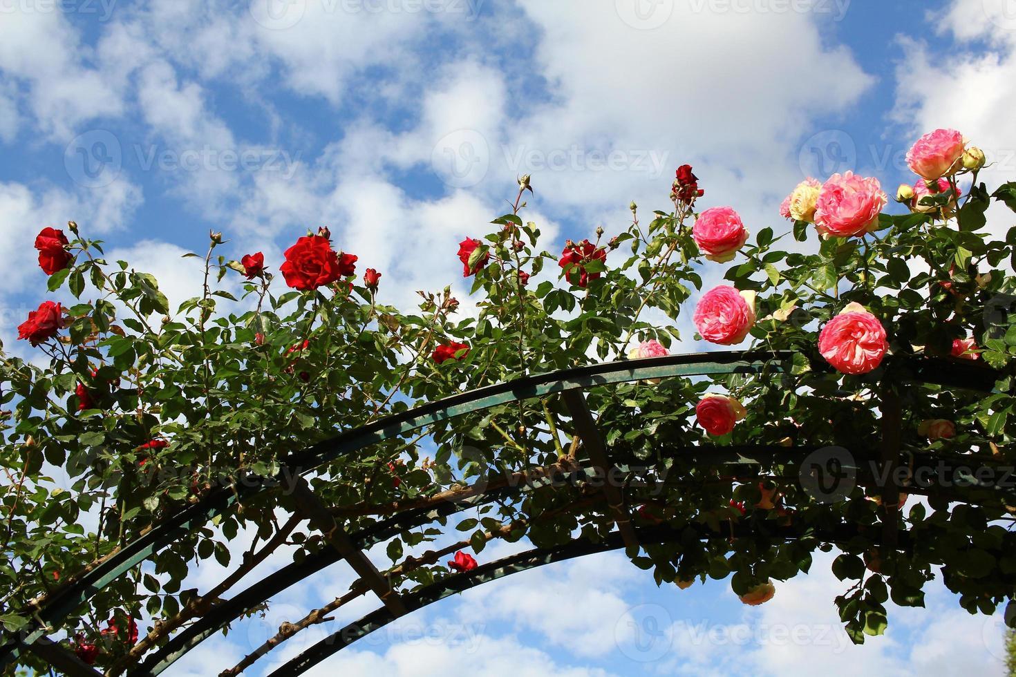 arc de roses photo