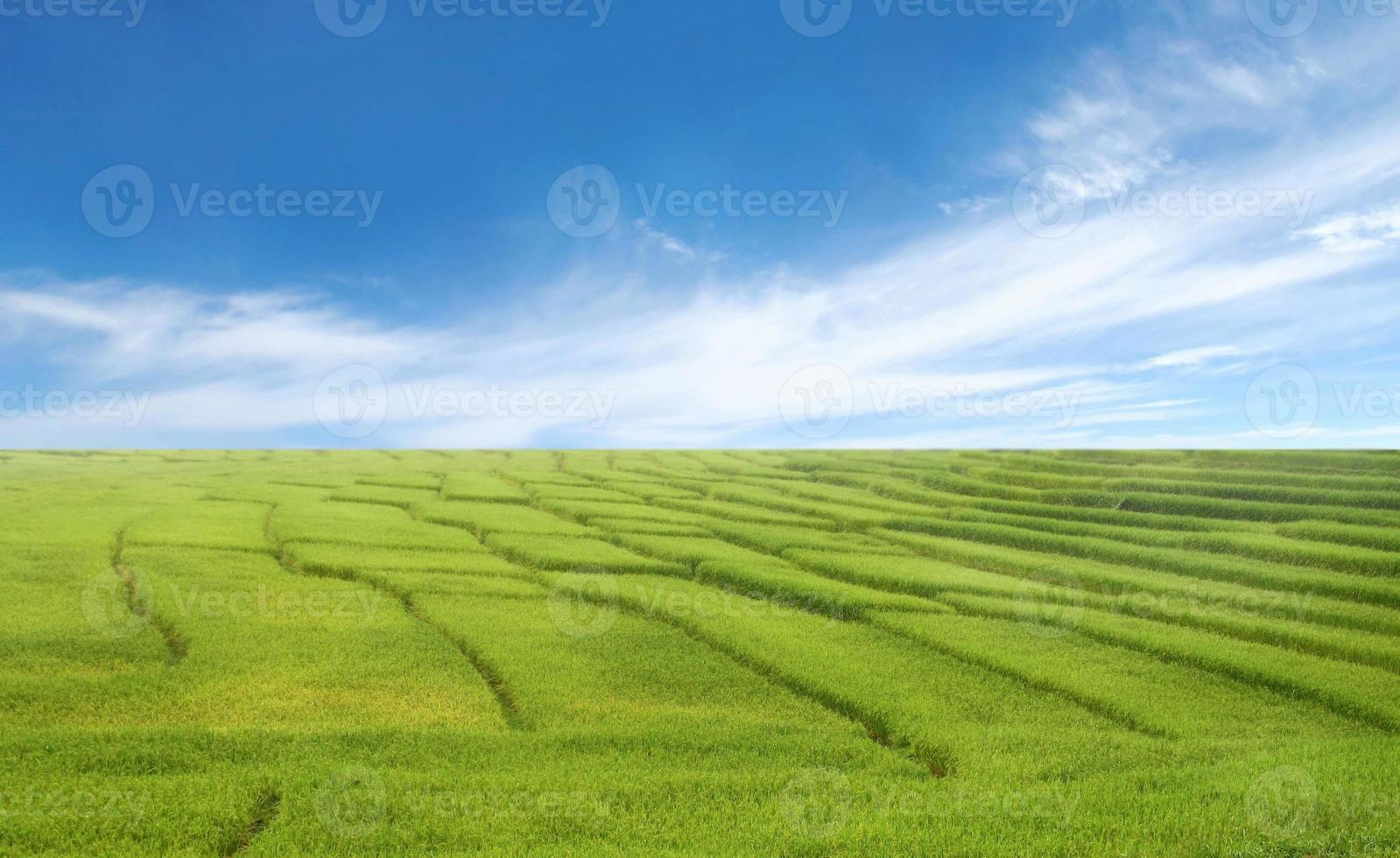 belle rizière et ciel bleu photo