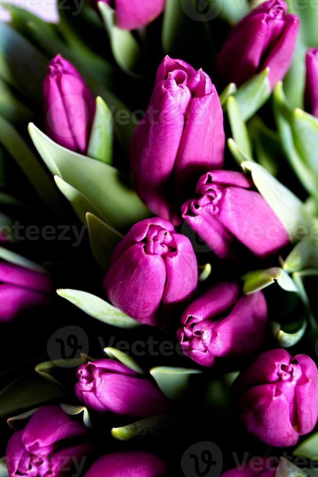 gros plan de tulipes photo