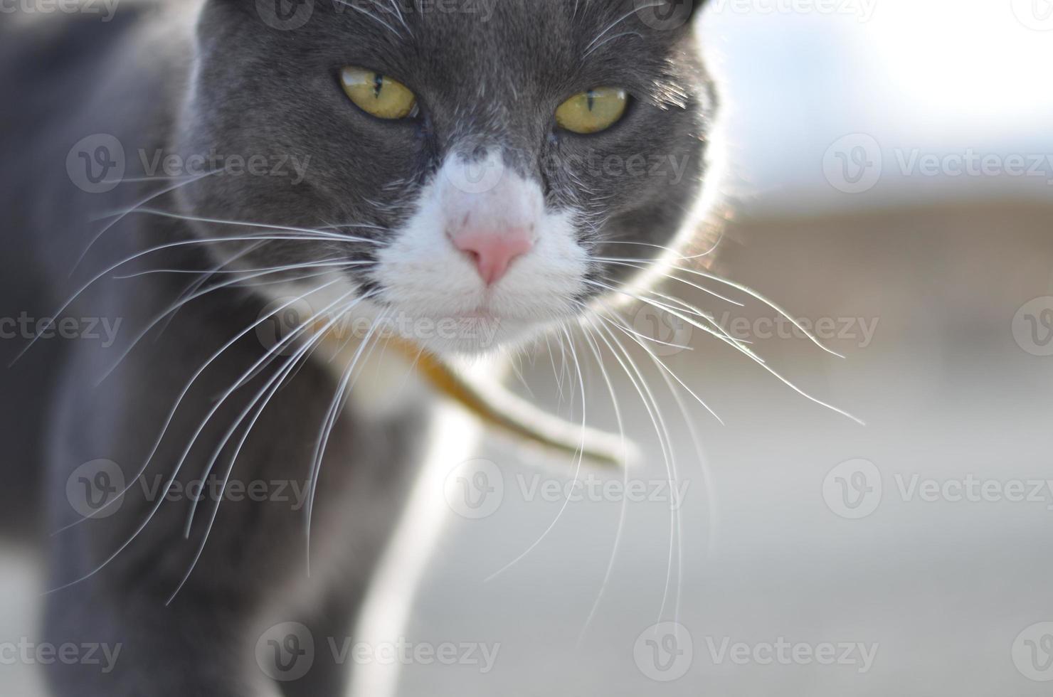 gros plan de chat photo