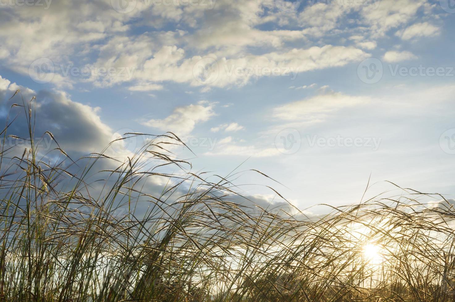 prairie photo