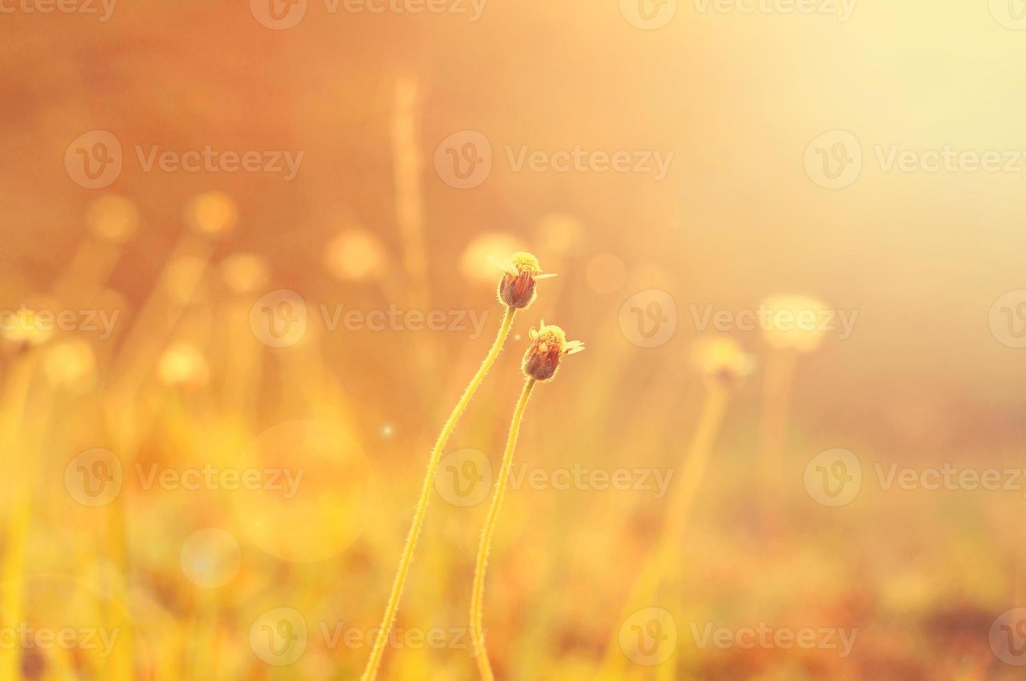 fleur sauvage avec lens flare. photo