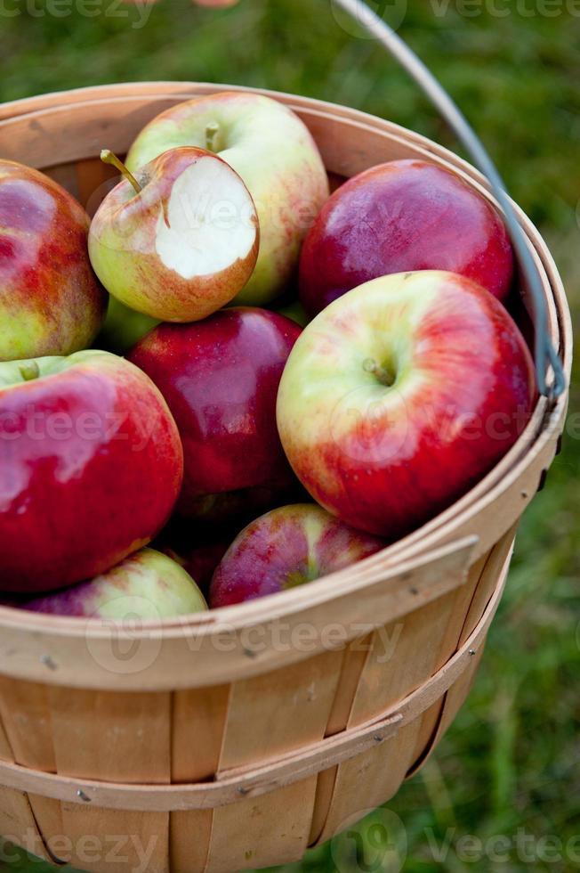 panier de pommes mûres photo