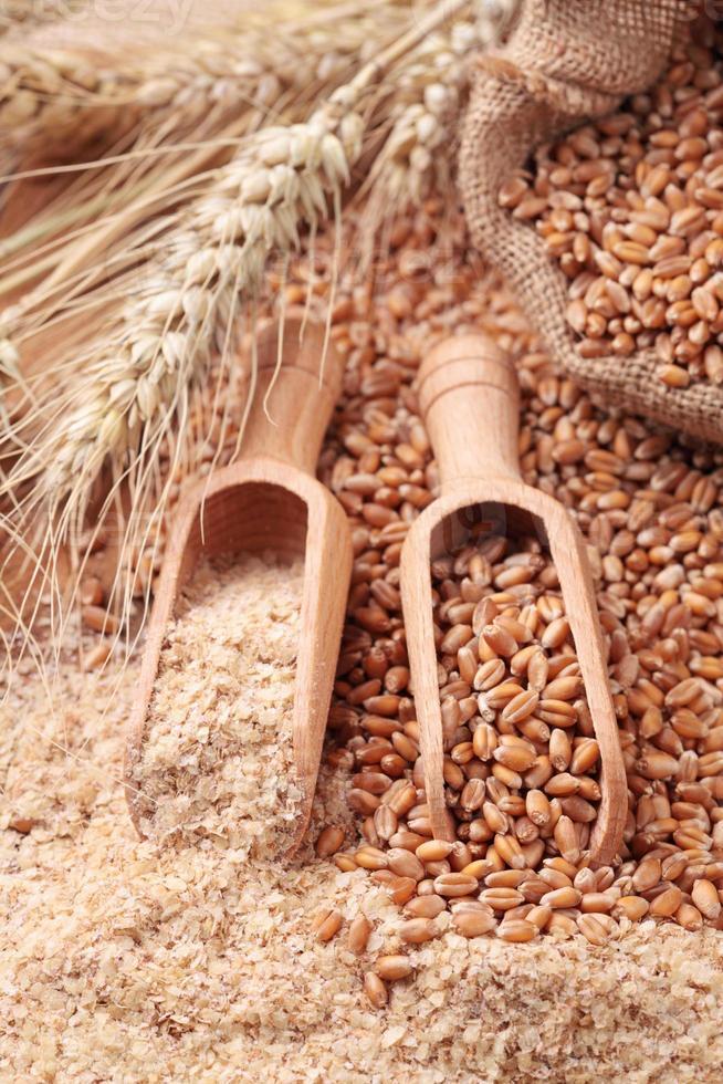 grains de blé et son photo