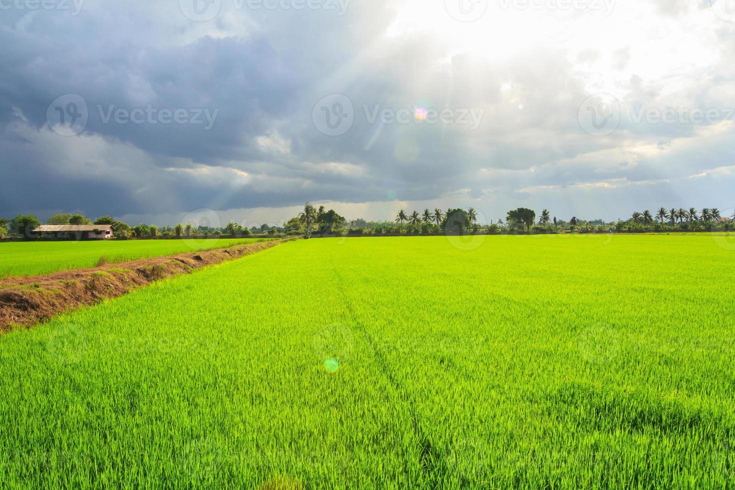 paysage de champ vert avec les rayons du soleil et la lumière parasite photo