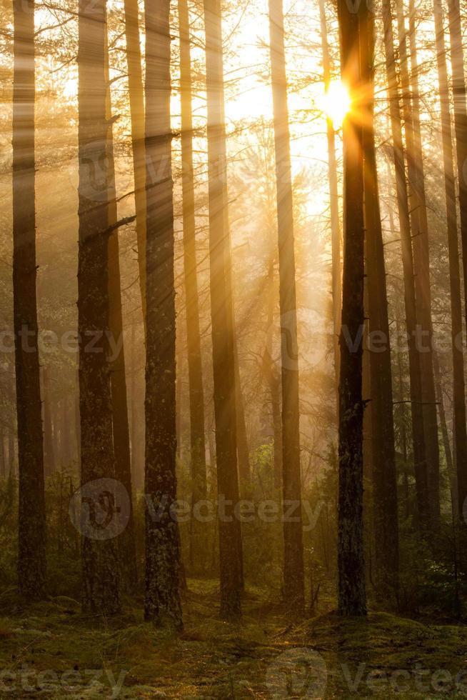 lever du soleil dans la forêt photo