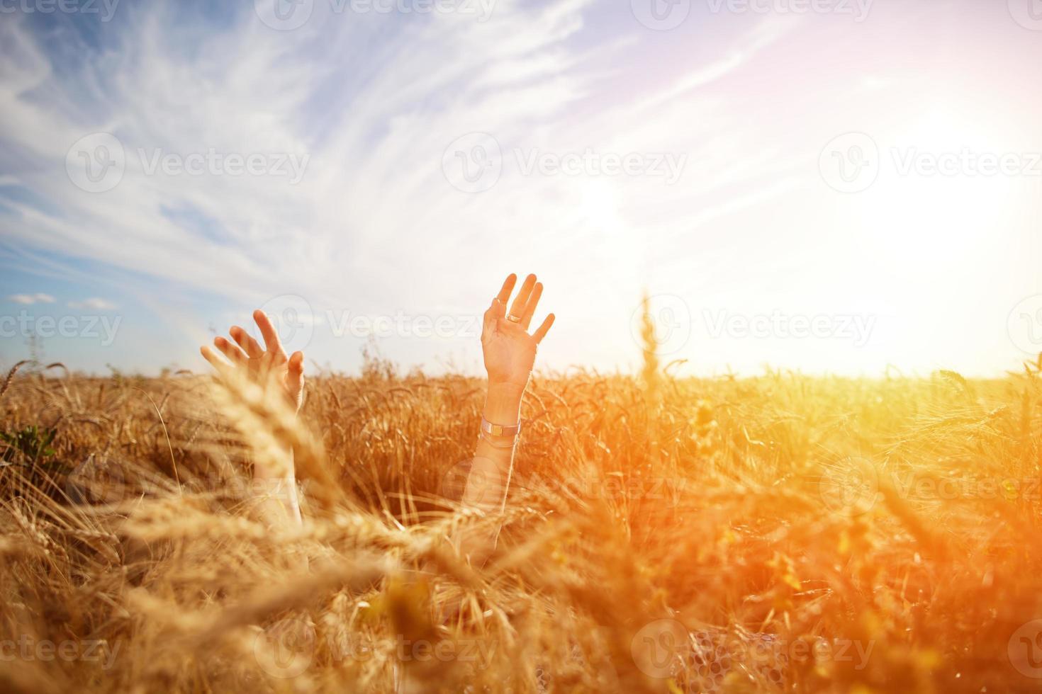 mains de la jeune fille au-dessus du champ de blé photo