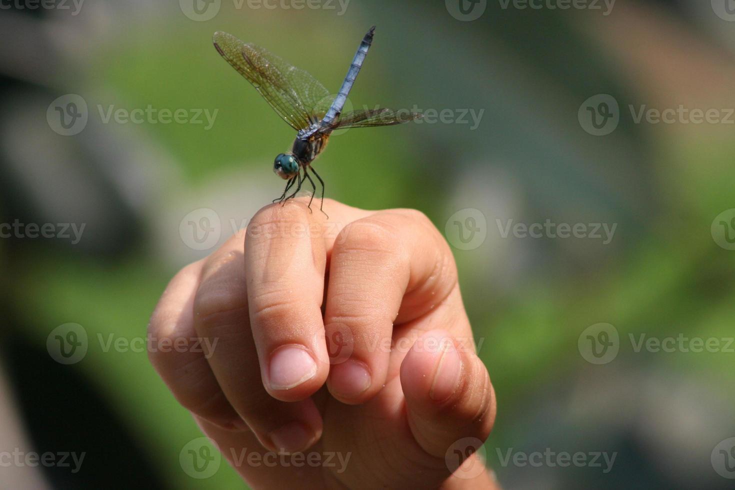 appui renversé libellule photo