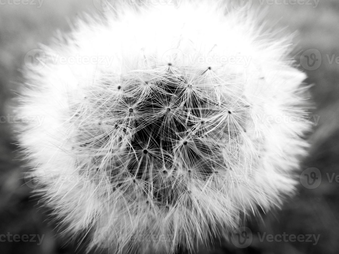 wishflower super macro photo