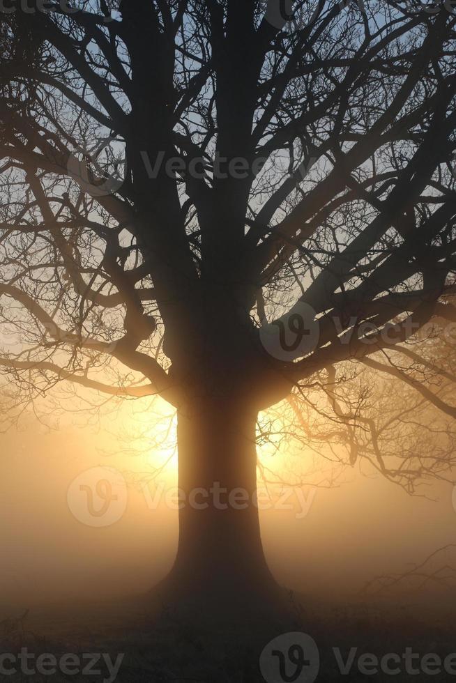 arbre au lever du soleil photo
