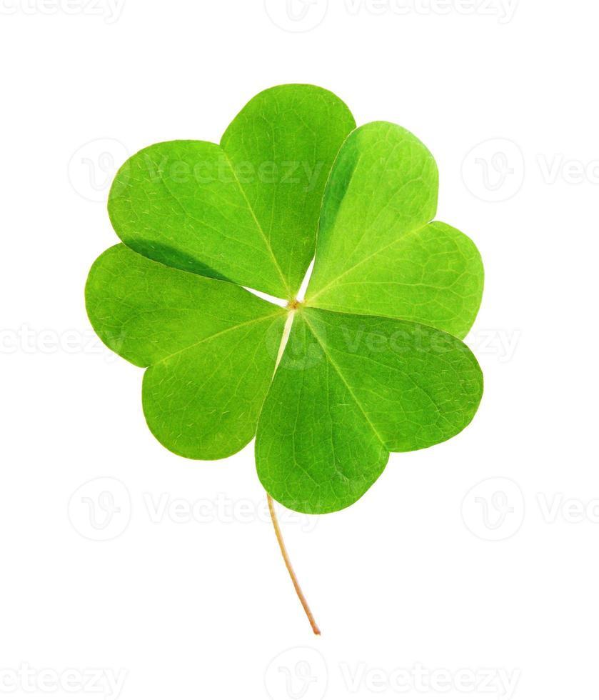 trèfle vert à quatre feuilles. photo