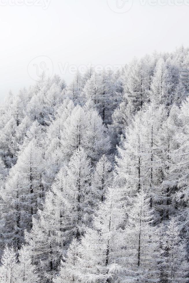 forêt dans la neige photo