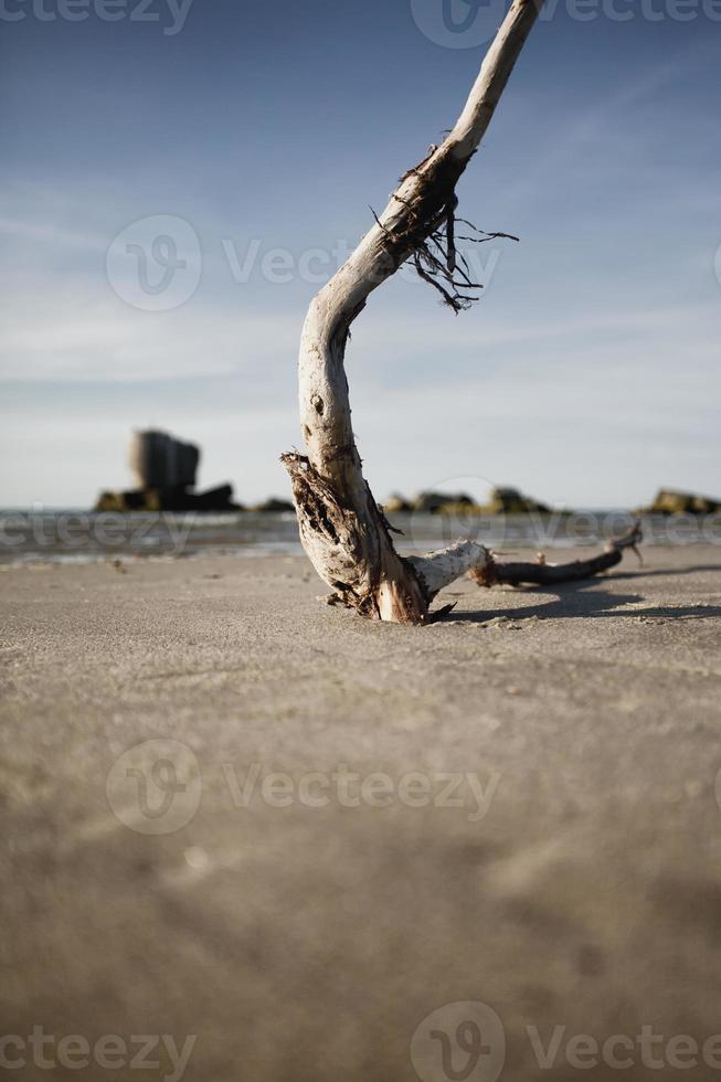 holz am strand photo