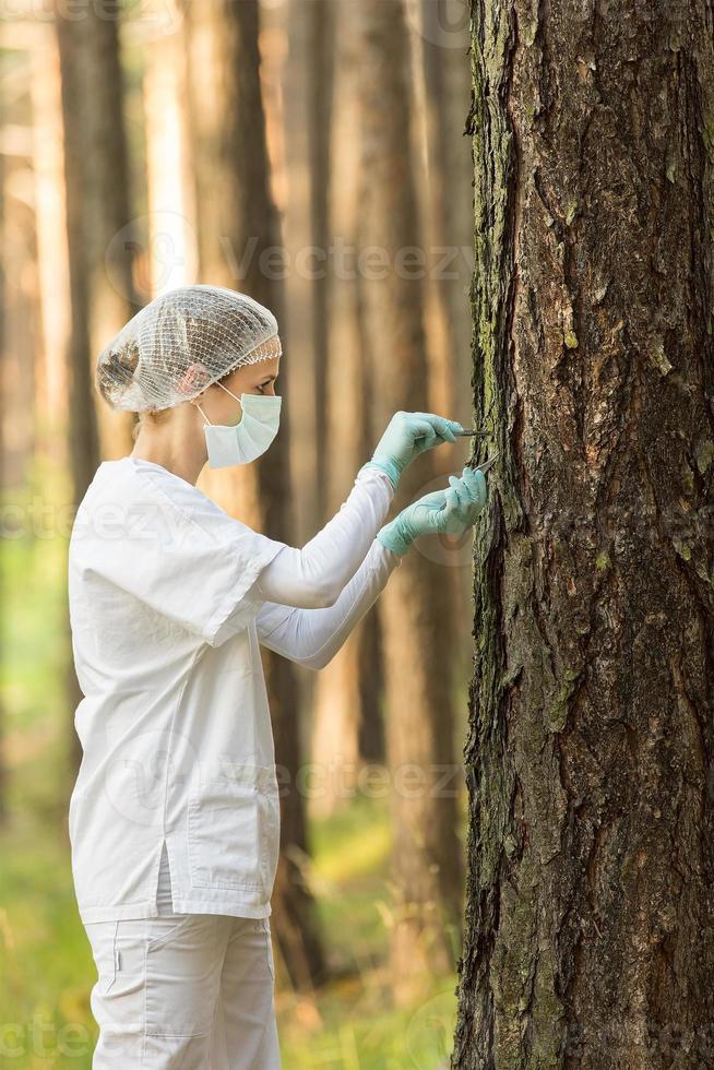 examiner la forêt photo