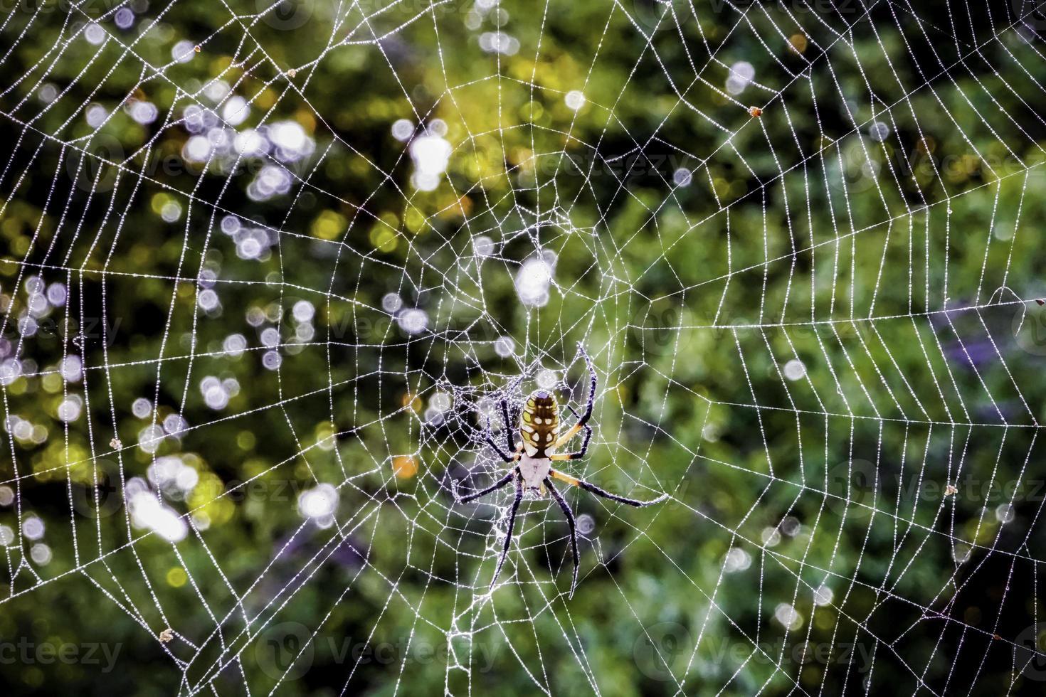 araignée photo