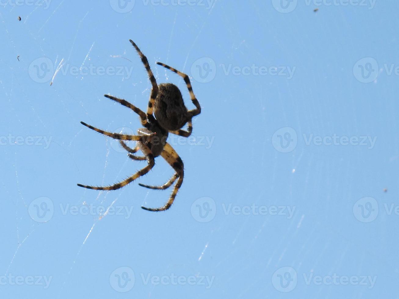 araignée et web bouchent photo