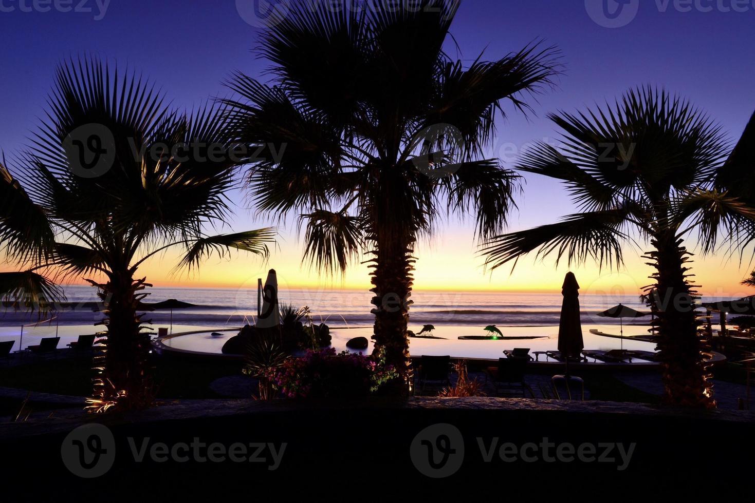 silhouette de palmier avec coucher de soleil photo