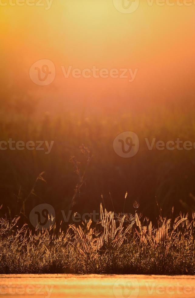 fleurs avec un soleil chaud photo