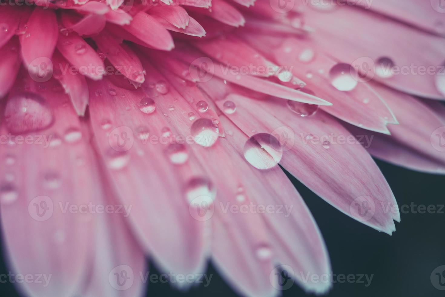 fleurs avec effet de filtre style vintage rétro photo