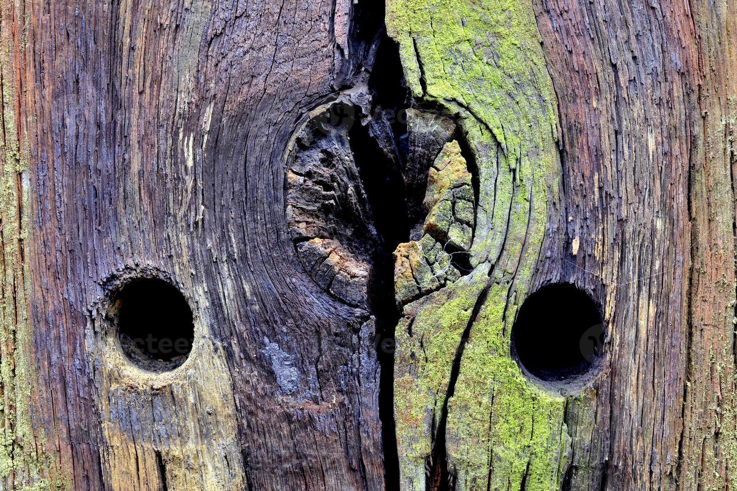 structure en bois. photo