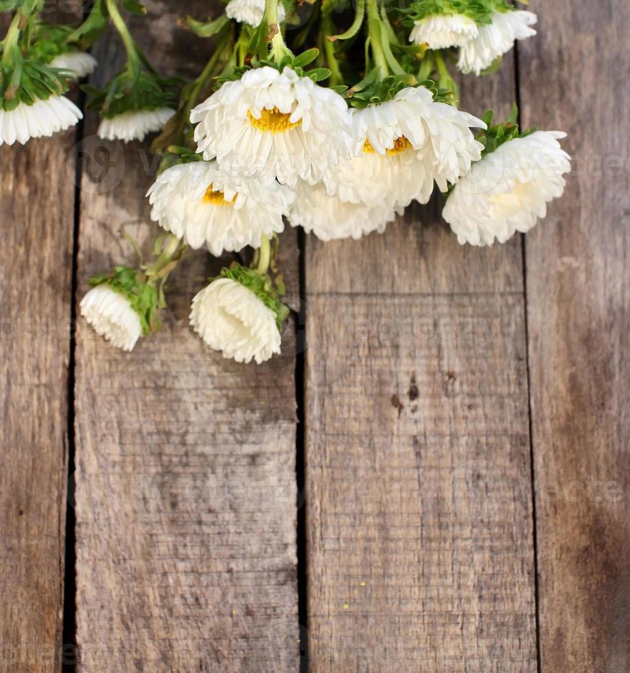fleurs d'aster blanc photo