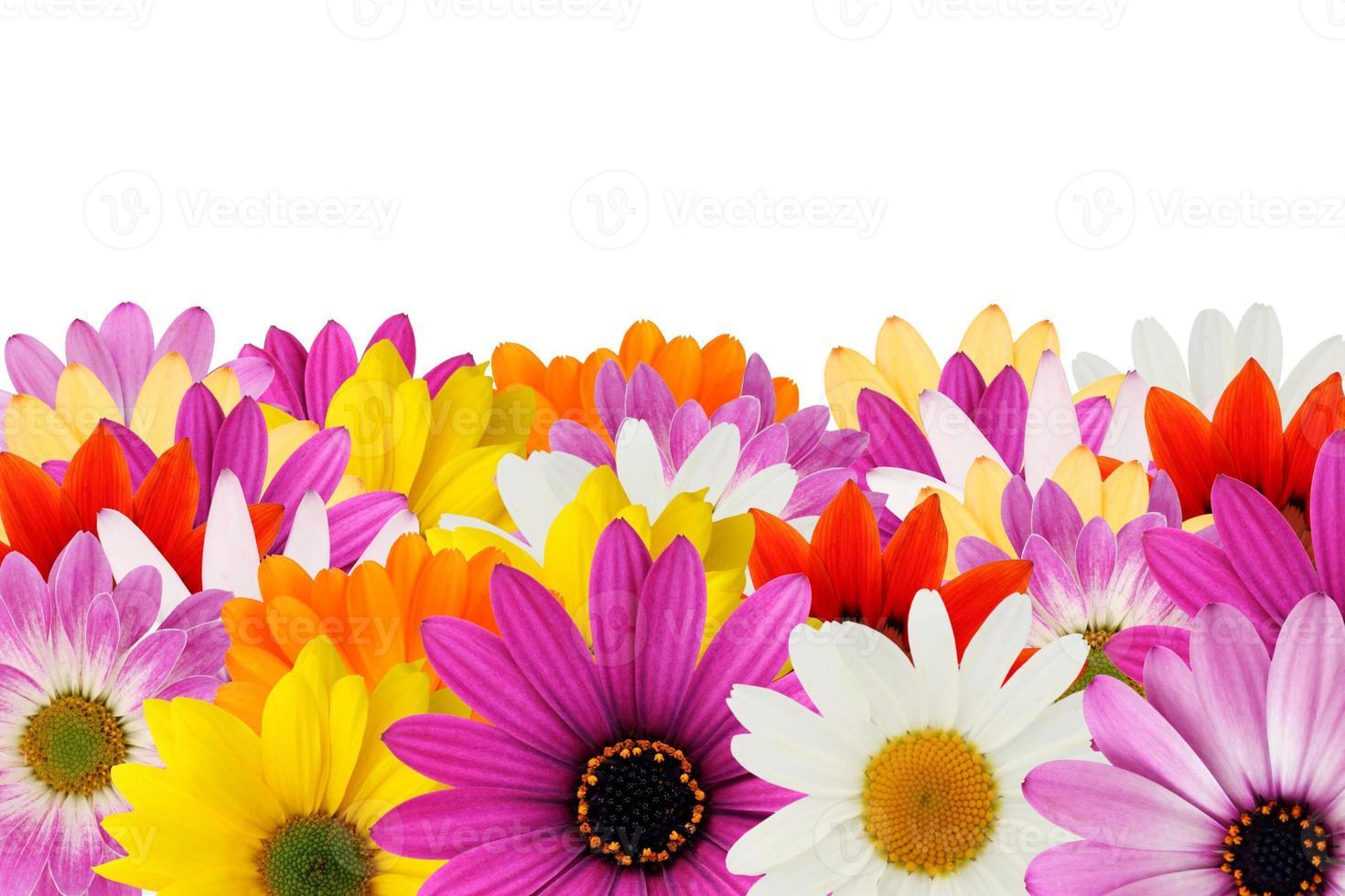 bordure de marguerite joyeuse photo