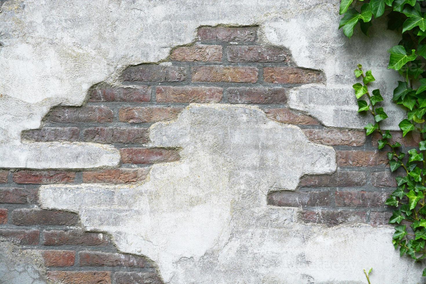 vieux mur de ciment de brique avec lierre arbre copie espace vide photo