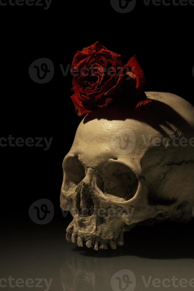 crâne humain antique avec rose mourante photo