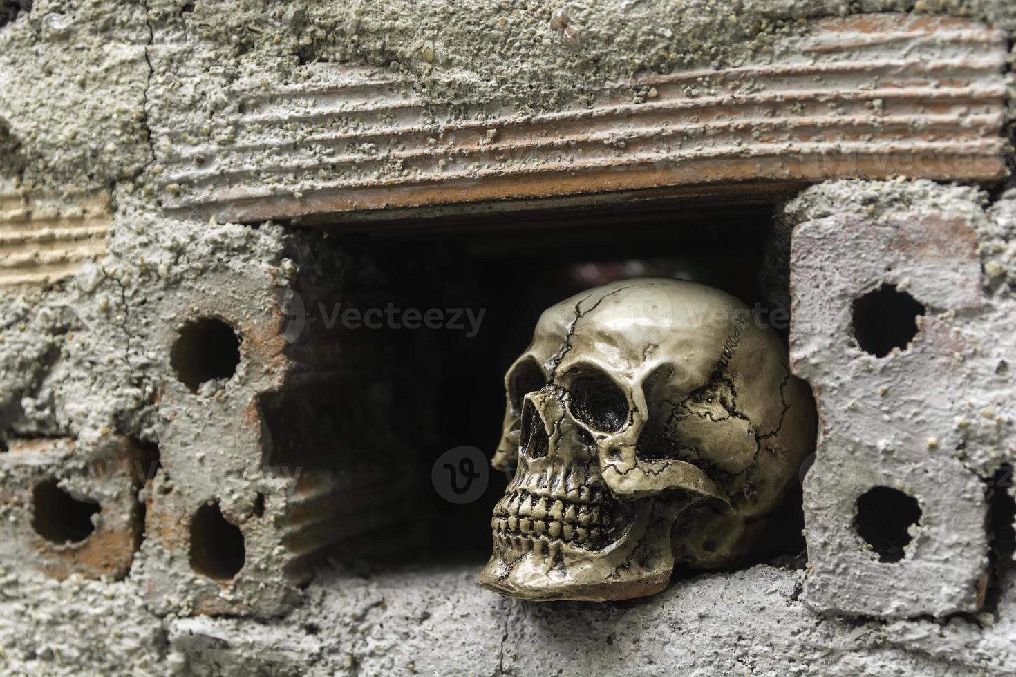 crâne ou squelette de la photographie humaine photo