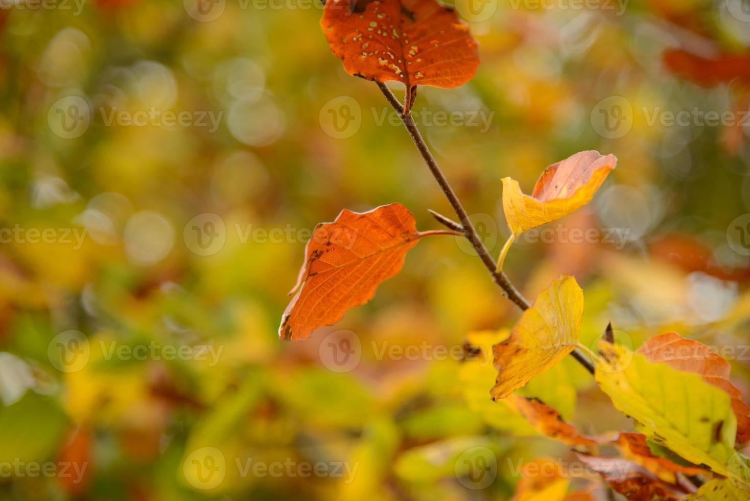 couleurs d'automne de près photo