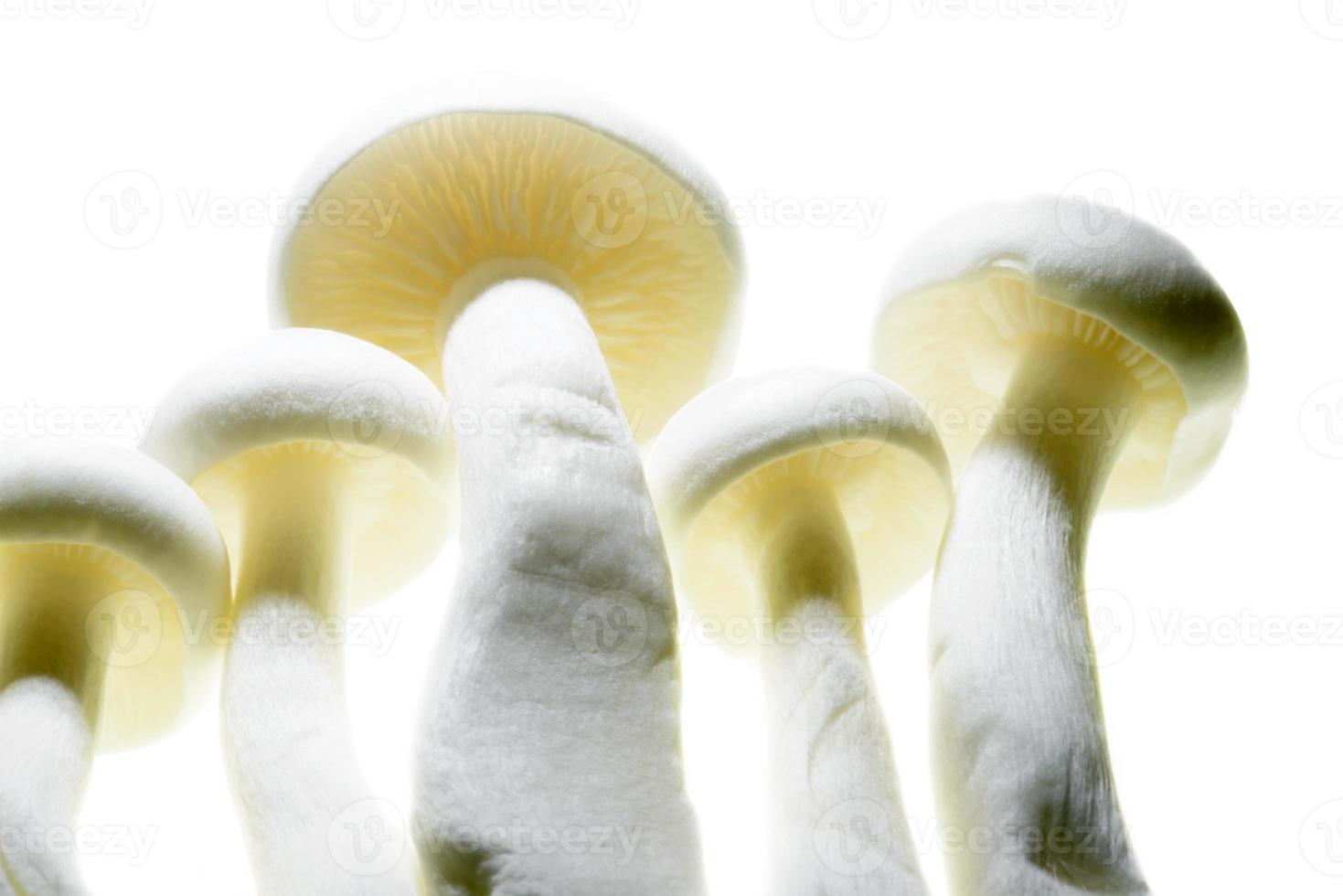 gros plan de champignon photo