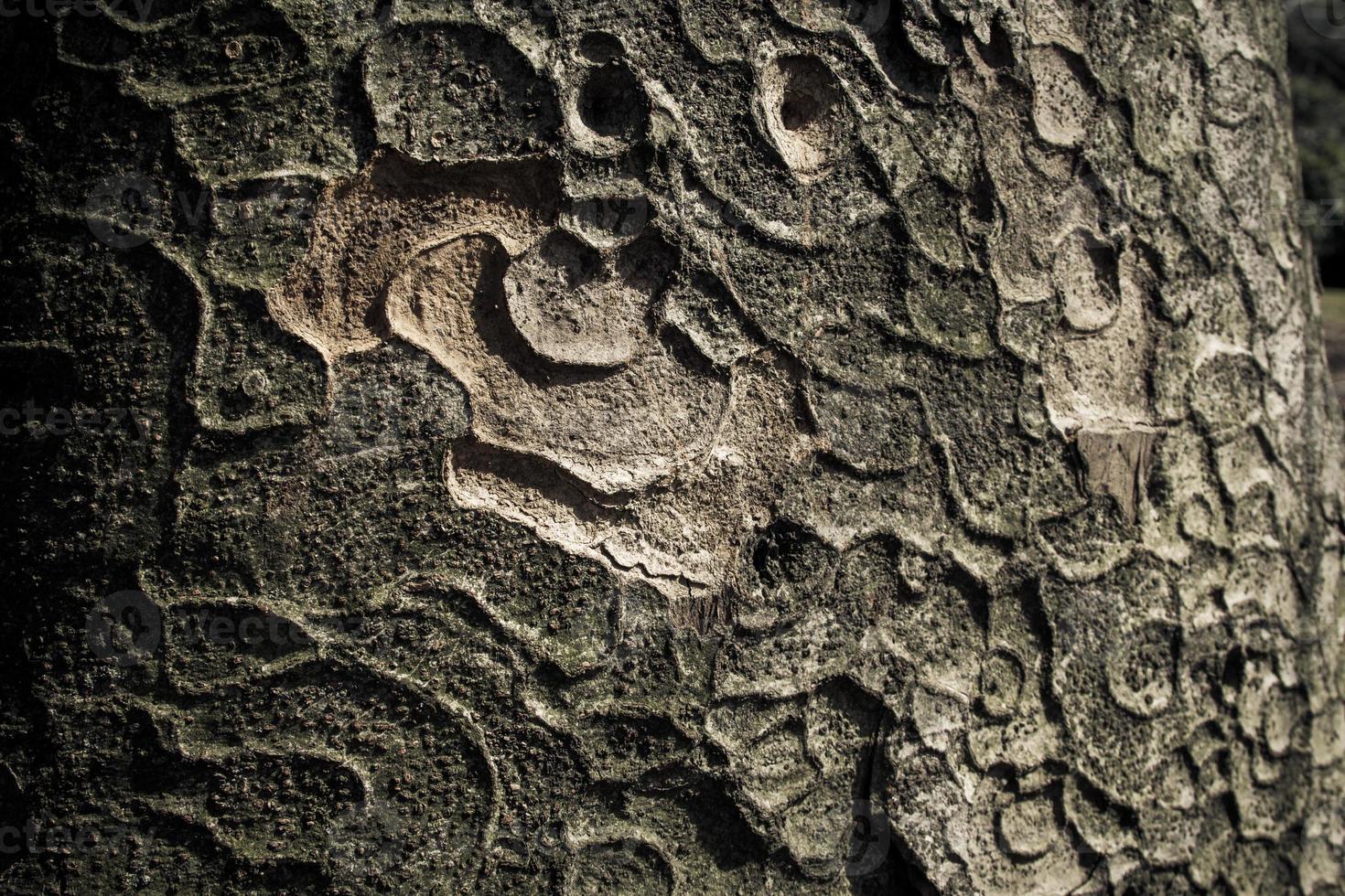 gros plan d'écorce d'arbre photo