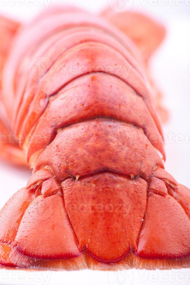 bouchent la queue de homard photo