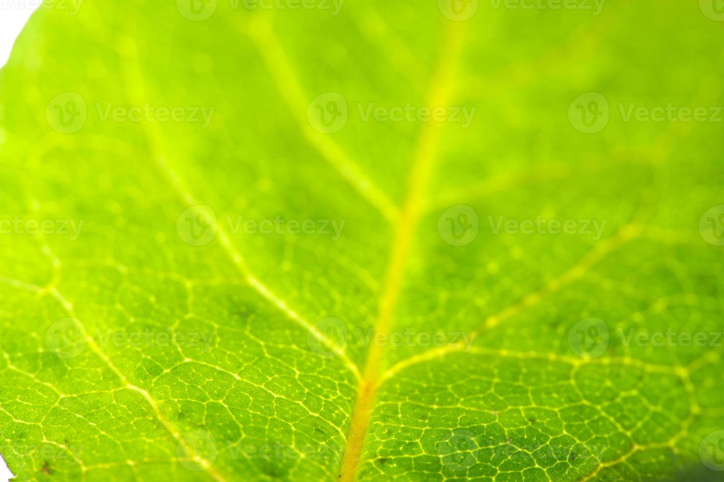 gros plan de feuille verte photo