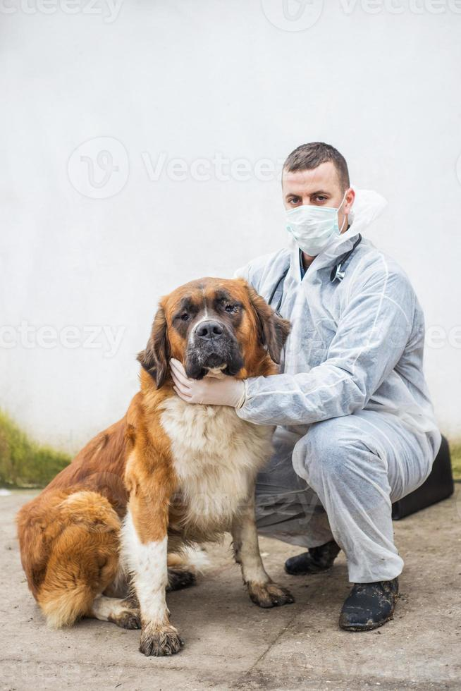vétérinaire inspecte et contrôle un chien. photo
