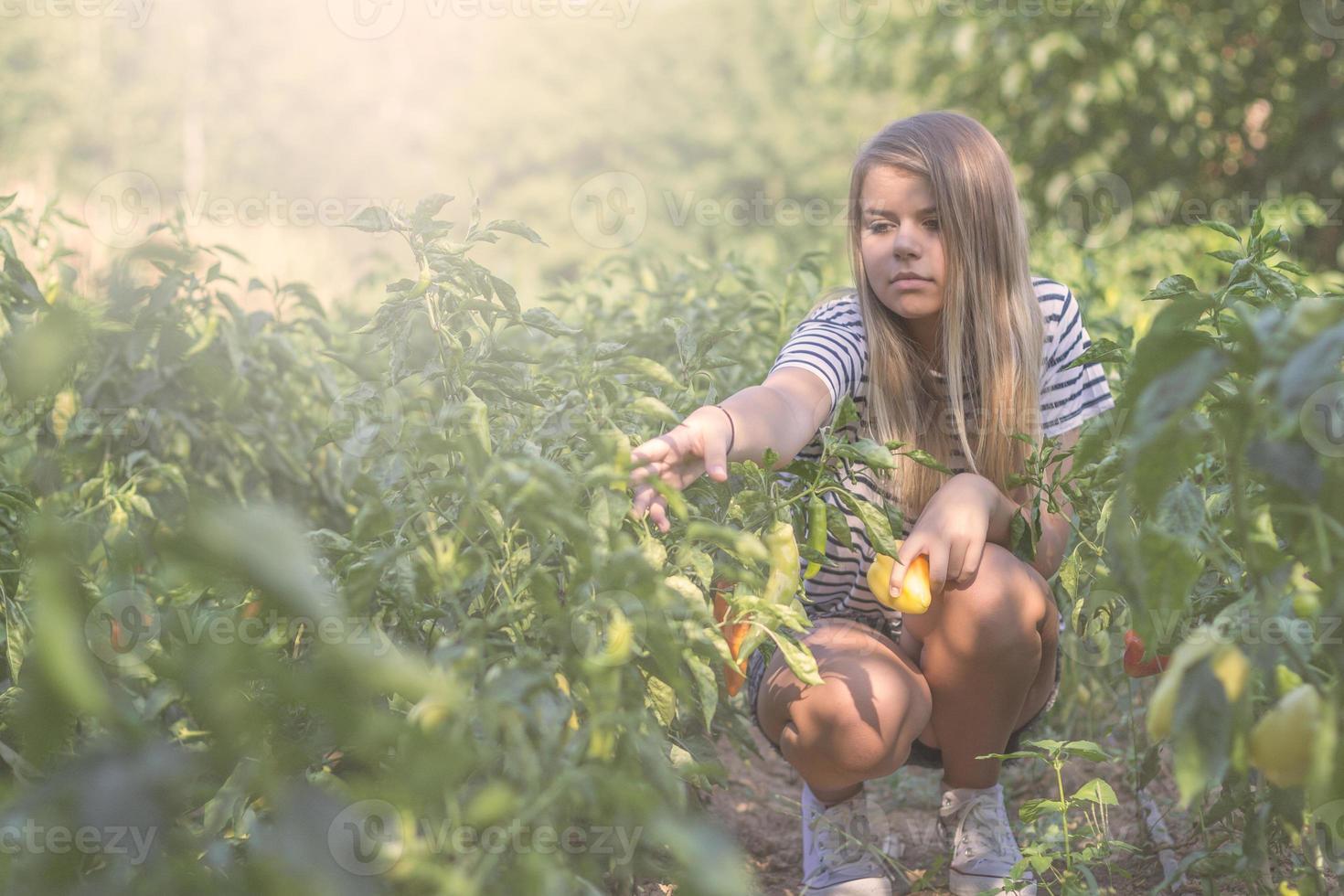 adolescent ramasser du paprika photo